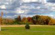 Wildwood Tree Planting Wraps Up