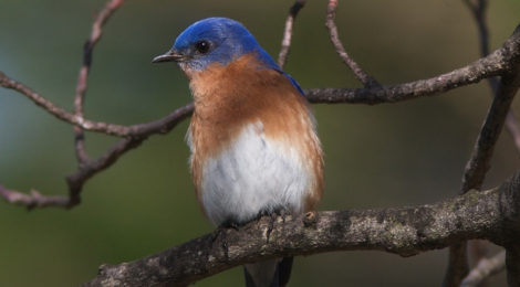 Biking and bluebirds on the Gateway Trail