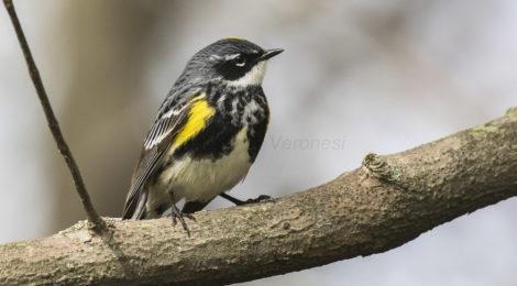 Spring bird walks on Gateway Brown's Creek Trail